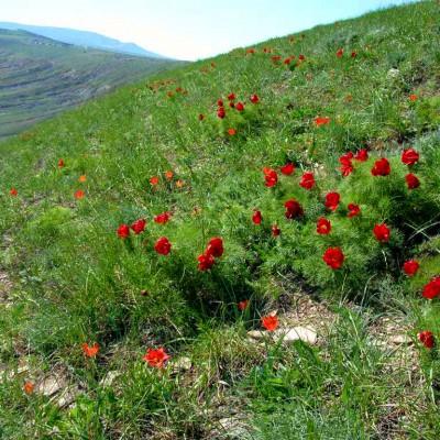 Мыс Казантип в Крыму, фото 5